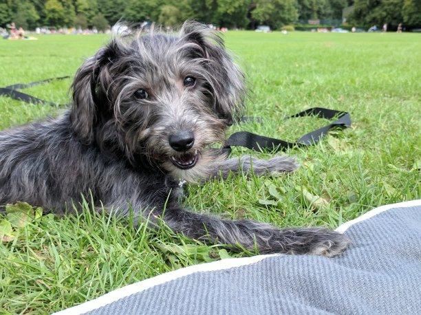 Luna in the park
